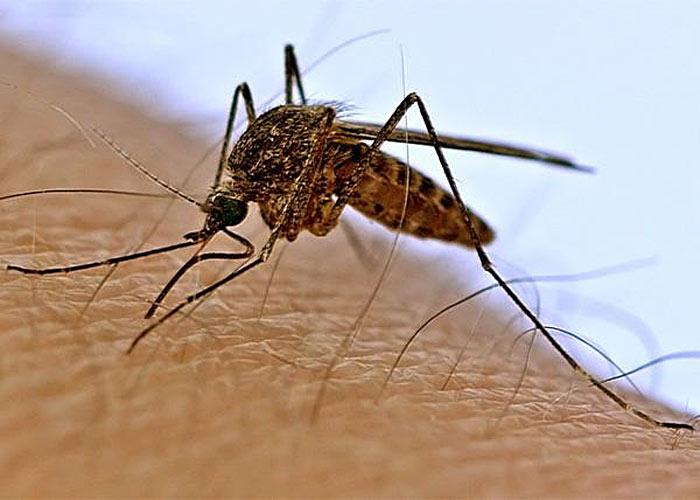 8 способов избавиться от комаров